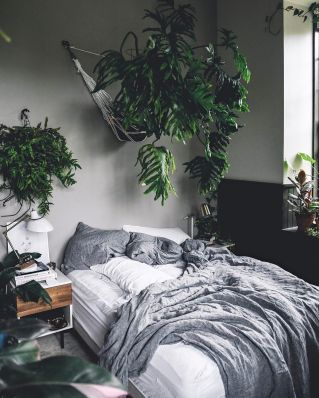 Indoor Plants 103