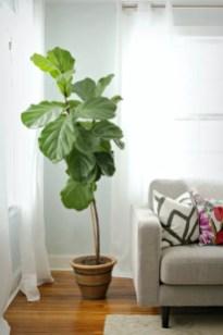 Indoor Plants 108