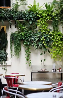 Indoor Plants 12