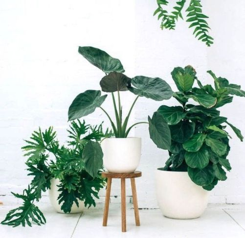Indoor Plants 17