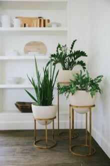 Indoor Plants 29
