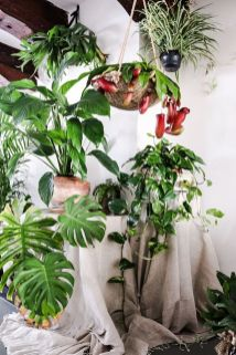 Indoor Plants 3