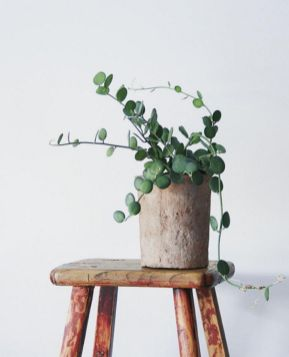 Indoor Plants 4