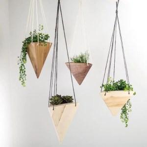 Indoor Plants 48