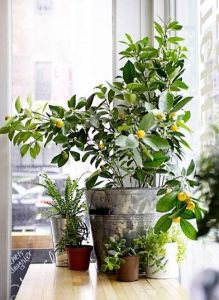 Indoor Plants 59