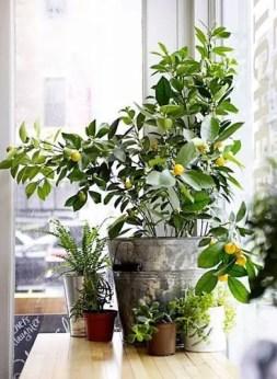 Indoor Plants 59