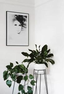 Indoor Plants 64