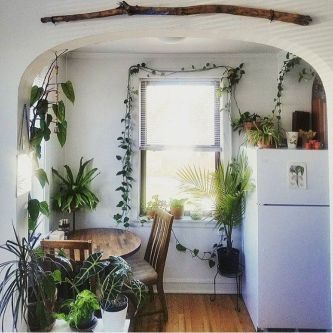 Indoor Plants 70