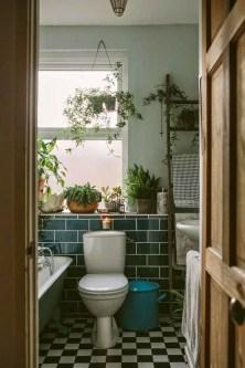 Indoor Plants 71