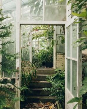 Indoor Plants 72