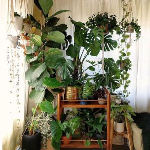Indoor Plants 76