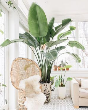 Indoor Plants 80