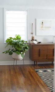 Indoor Plants 87