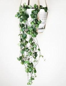 Indoor Plants 96