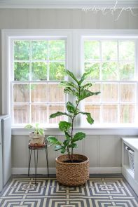Indoor Plants 97