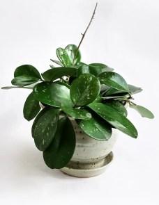 Indoor Plants 98