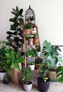 Indoor Plants 99