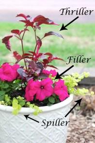 Flower Garden Ideas 4