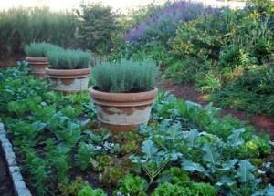 Potager Garden 11