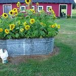 Flower Beds In Front Of House 17