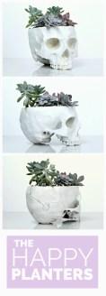 Succulents 20