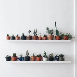 Succulents 22