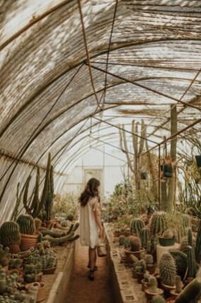 Cactus Aesthetic 10