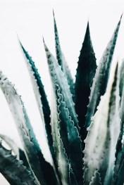 Cactus Aesthetic 12