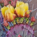 Cactus Aesthetic 13