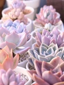 Cactus Aesthetic 14