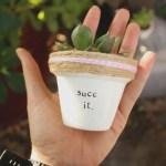 Cactus Aesthetic 18