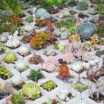 Cactus Aesthetic 21
