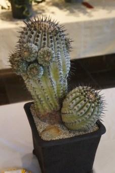 Cactus Aesthetic 25