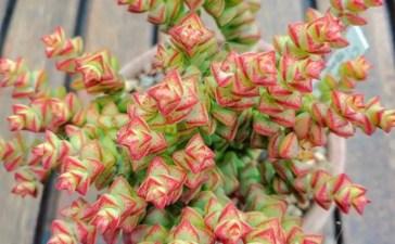 Cactus Aesthetic 51