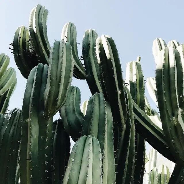 Cactus Aesthetic 6