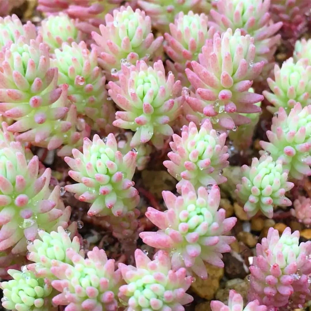 Cactus Aesthetic 7