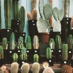 Cactus Aesthetic 8