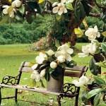 Magnolia House Garden 1