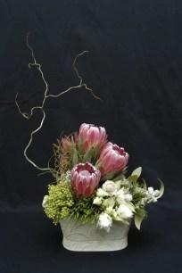 Protea Flower 5
