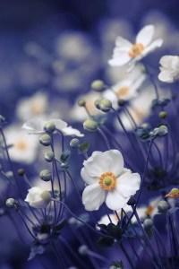 Wildflower Field 11