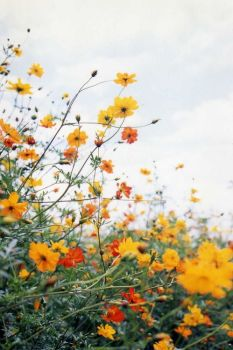 Wildflower Field 12