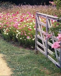 Wildflower Field 18
