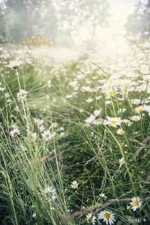 Wildflower Field 19