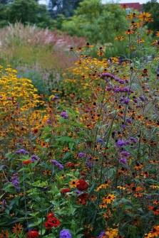 Wildflower Field 2