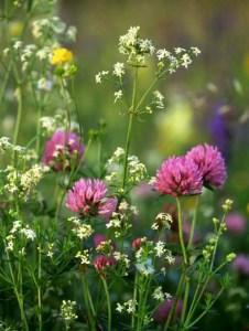 Wildflower Field 3