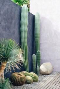 Cactus Landscaping 16