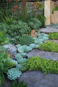 Cactus Landscaping 17