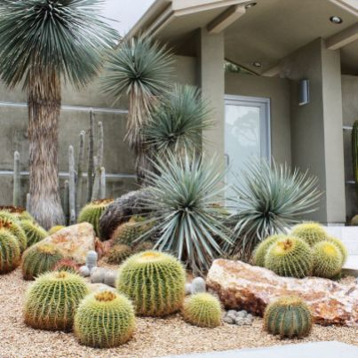 Cactus Landscaping 18