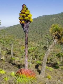 Cactus Landscaping 22