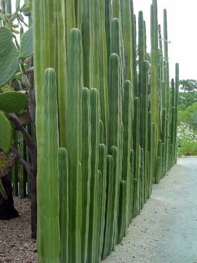 Cactus Landscaping 4